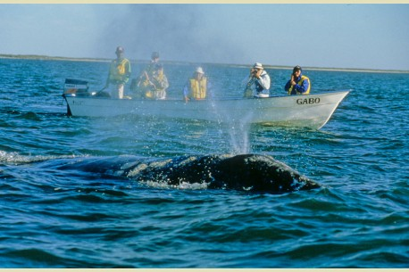Sea Kayaking & Whale Watching