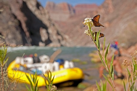 Grand Canyon Rafting: Phantom Ranch to Lake Mead
