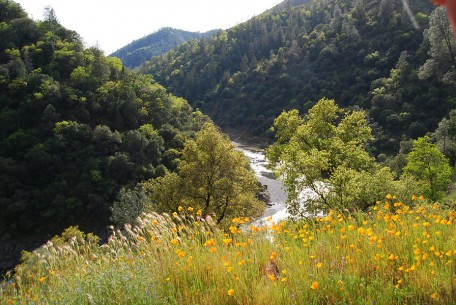 Poppies Above the North Fork American River