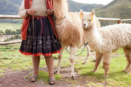Peruvian Girl with Alpacas