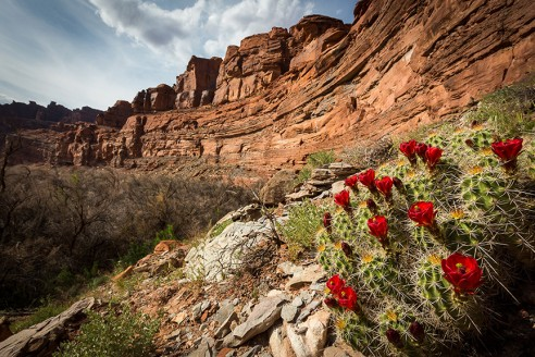 Hiking Canyonlands: Colorado and Green River Special