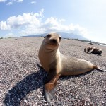 A sea lion poses for the camera and seems to have no fear as onlookers get up-close-and-personal. Photo: Justin Bailie