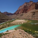 Turquoise waters flow from the confluence of the Little Colorado to join the Colorado River. Photo: Ned Sickles