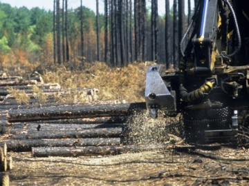 Salvage-Logging_WI-Department-of-Natural-Resources-653x419.jpg