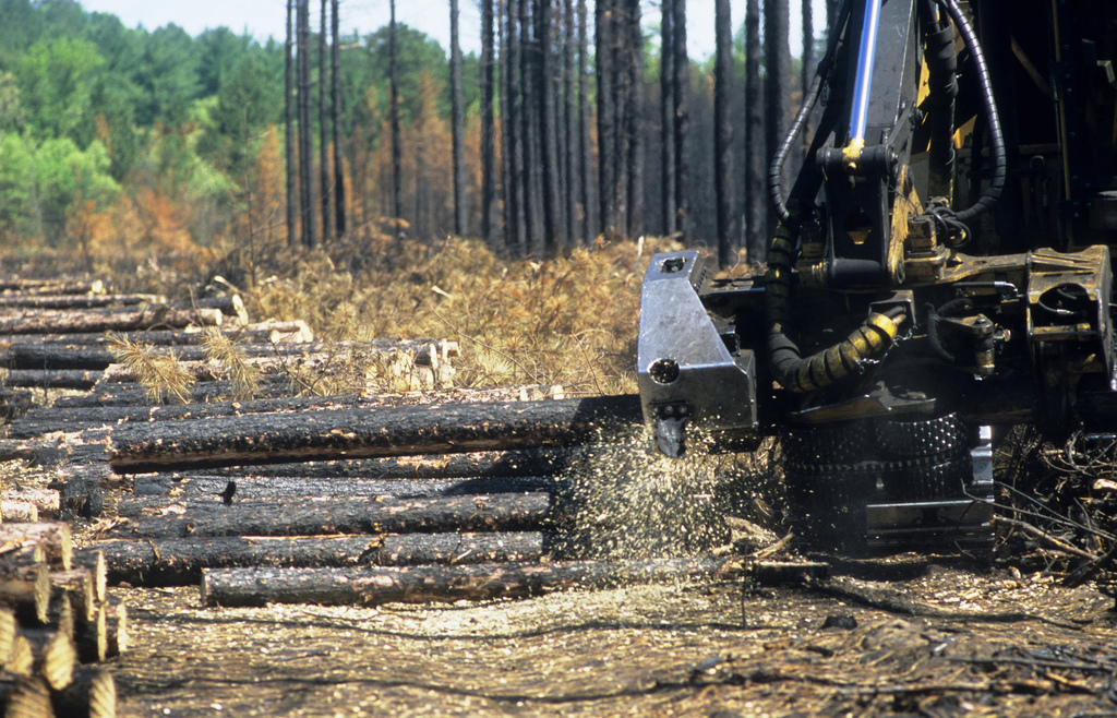 The Truth About Rim Fire Salvage Logging