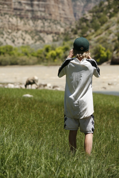 Watching wildlife from afar in Dinosaur National Monument