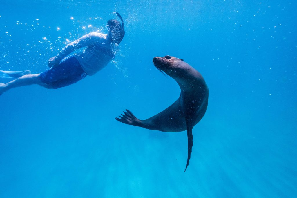 Adventure Travel - Swimming with seals in the Galapagos