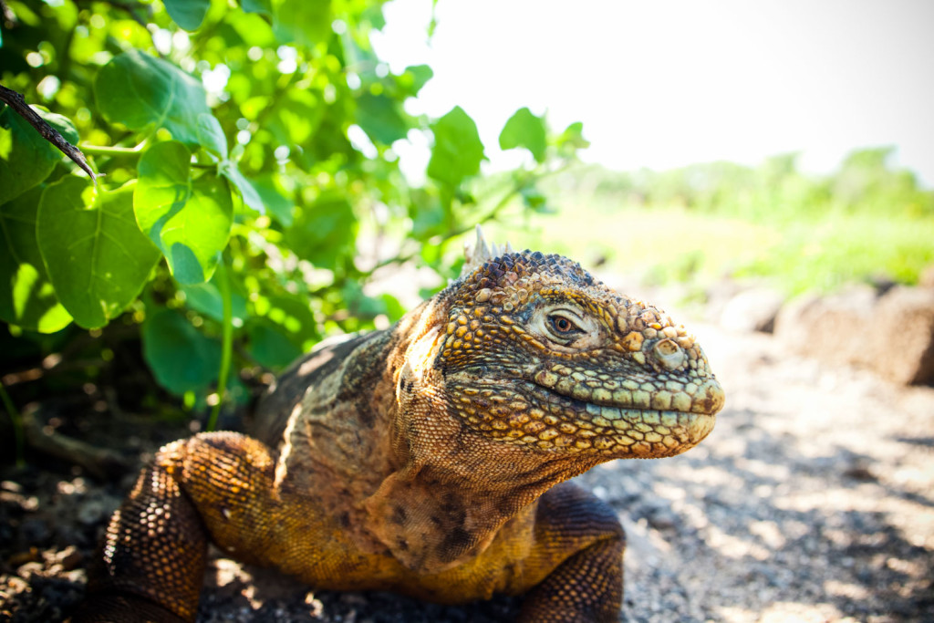 11 Amazing Creatures You'll Meet in the Galapagos