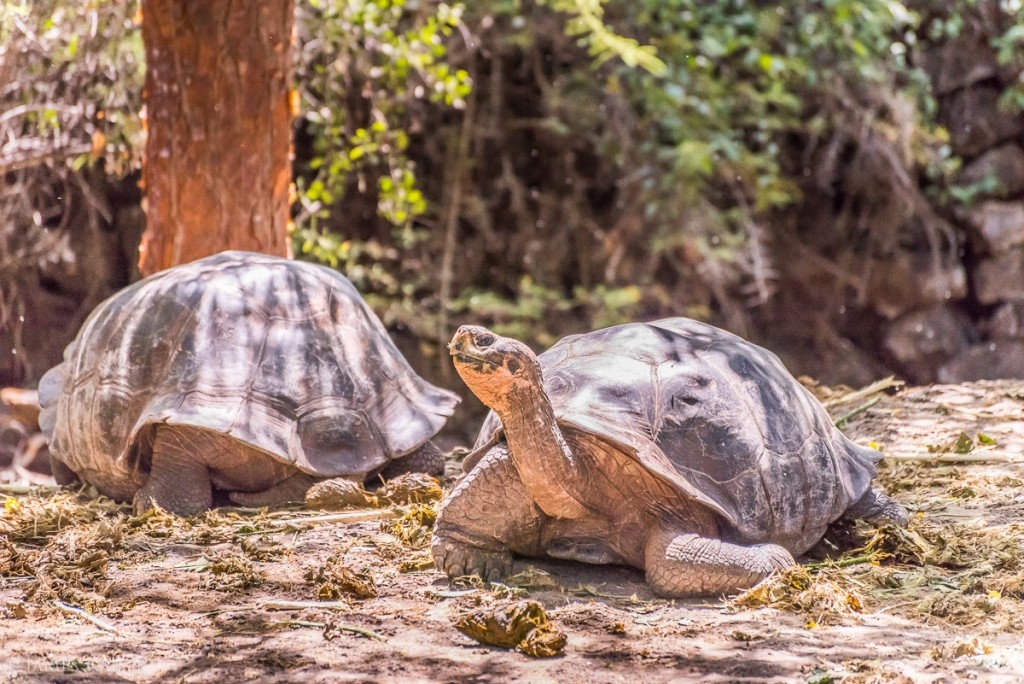 Galapagos | Santa Cruz Island | Photo: James Kaiser