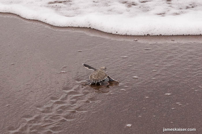 Top Adventures in Costa Rica - Watching Sea Turtles Nest at Tortuguero