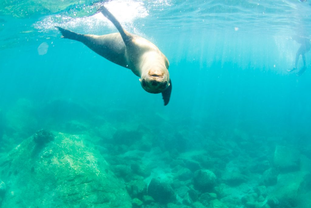 Experience the Real Baja | Swimming with sea lions at Los Isolotes