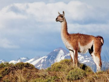 5 of the Best National Parks Along Chile's Route of Parks