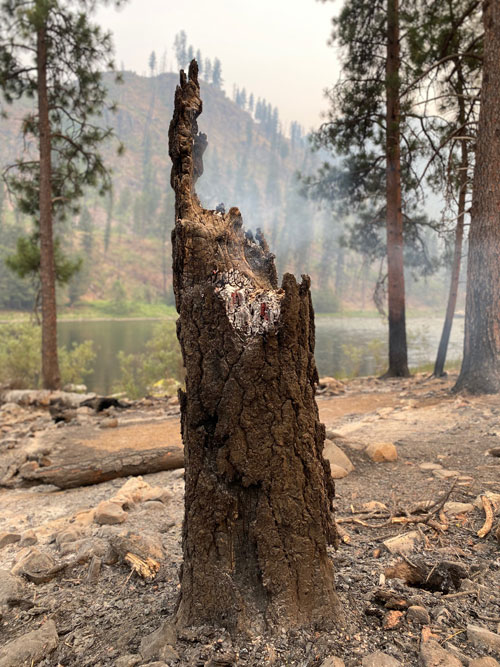 Smoldering tree after the Dixie-Jumbo Fires